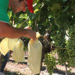 winemaking alicante costa blanca